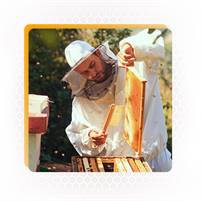 Consultation Services For Beekeeping Business