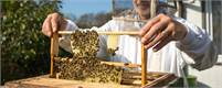 Beekeeping Training & Education | BeeHively