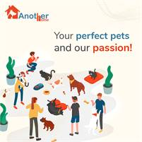 Professional Dog Daycare Service in Delhi